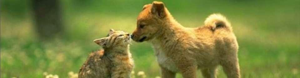 banner_cat_dog